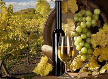 C-305  Вино  200х147 Bon Appetit