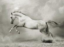 A-060 Белый конь 200х147 Черно-белое