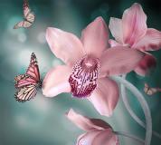A-030 Бабочки 300х270 Цветы