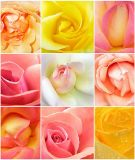A-039 Розы микс 200х238 Цветы