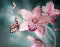 A-046 Бабочки 300х238 Цветы