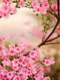 B-086 Весенняя азалия 200х270 Цветы
