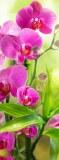 B-095 Сияющая орхидея 100х270 Цветы