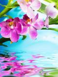 B-096 Цветки орхидеи 200х270 Цветы
