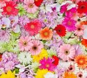 B-097 Цветочный фон 300х270 Цветы