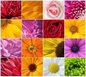 B-098 Цветы микс 300х270 Цветы