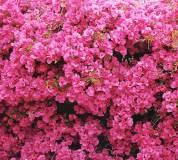 C-152 Стена цветов 300х270 Цветы