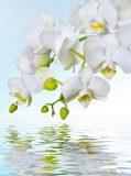 C-244 Орхидея над водой 200х270 Цветы