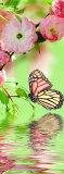 C-285 Бабочка 100х270 Цветы