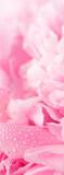 C-288 Лепестки 100x270 Цветы