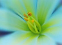 C-315 Волшебный цветок 200х147 Цветы