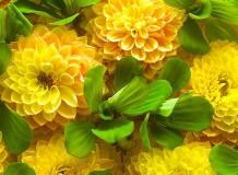 C-316 Желтые цветы 200х147 Цветы