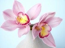 C-320 Орхидея 3 200х147 Цветы