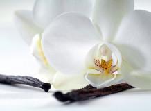 C-321 Орхидея и ваниль 200х147 Цветы