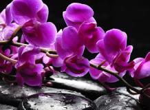 C-322 Орхидея на камнях 200х147 Цветы