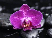 C-323 Орхидея на камнях 2 200х147 Цветы