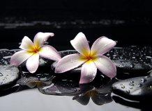 C-324 Плюмерия на камнях 200х147 Цветы