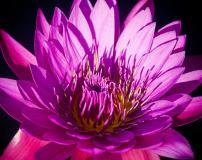 C-386 Яркий цветок 300х238 Цветы
