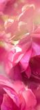 C-396 Розовые цветы 100x270 Цветы