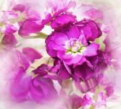 D-006 Цветы дымка 300х270 Цветы