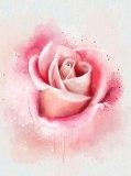 D-081 Роза живопись 200х270 Цветы