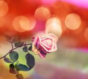 E-022 Розочка 300х270 Цветы