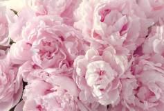 L-065 Пышные цветы 400х270 Цветы