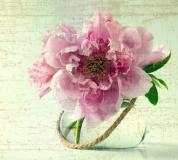 L-066 Пион винтаж 300х270 Цветы