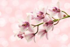 P-111 Цветы на розовом фоне 400х270 Цветы