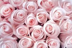 T-159 Нежные розовые розы 400х270 Цветы