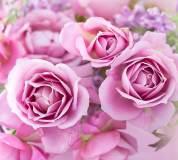 T-192 Прекрасные розы 300х270 Цветы