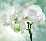 T-175 Веточка орхидеи 300х270 Цветы