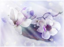 T-267 Цветки магнолии 200х147 Цветы