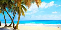 C-007 Тропический пляж 300х147 Море - Океан