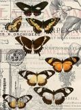 E-044 Бабочки 200х270 Принты - фоны