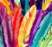 T-200 Разноцветные перья 300х270 Принты-Фоны