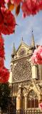 C-265 Нотр-Дам де Пари в цветах 100x270 Замки - Соборы - Церкви