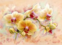 C-300 Орхидея живопись 200х147 Живопись