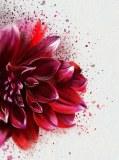 T-269 Цветок акварель 200х270 Живопись