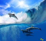 B-066 Дельфины в волнах 300х270 Животный мир