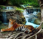 B-074 Тигр у водопада 300х270 Животный мир