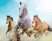 C-079 Лошади 300х238 Животный мир
