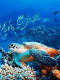 C-211 Морская черепаха 200х270 Животный мир