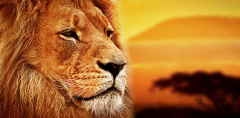 C-347 Царь зверей 300х147 Животный мир
