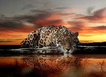 P-013 Леопард 200х147 Животный мир