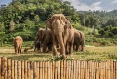 P-097 Слоны 400х270 Животный мир