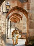 P-101 Тигр в античном коридоре 200х270 Животный мир