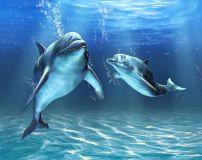 D-064 Два дельфина 300х238 Животный мир