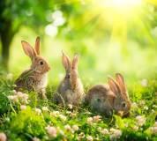 D-113 Кролики 300х270 Животный мир