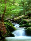 A-023 Зеленый лес 200х270 Природа